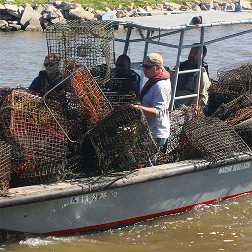 Image: Derelict Crab Trap Removal 2016