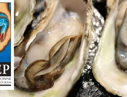 Oysters and Louisiana's Changing Coast